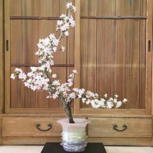 桜 留流し